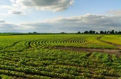Central Illinois jordbruksmark fotografering för bildbyråer