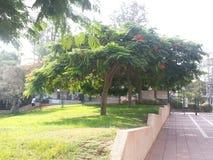 Central Israel Kfar Saba, Trip, Israel. A week trip to Kfar Sava Royalty Free Stock Photo