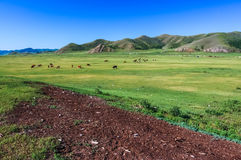 Central Mongolian steppe Royalty Free Stock Photos