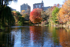 central ny park york för höst arkivfoton