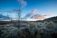 Central Oregon för Oregon ökensoluppgång Royaltyfria Bilder