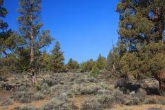Central Oregon hög öken royaltyfri bild
