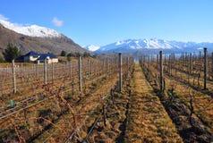 Central Otago Vineyard, New Zealand Stock Photos