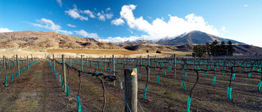 Central Otago Winery in Winter Royalty Free Stock Photos