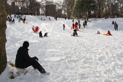 Central Park åka släde Arkivfoto