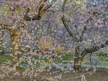 Central Park, άνοιξη πόλεων της Νέας Υόρκης Στοκ εικόνα με δικαίωμα ελεύθερης χρήσης