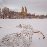 Central Park μετά από το χιόνι Strom Linus Στοκ Εικόνες