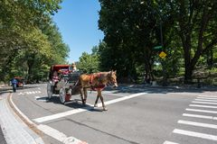Central Park στην πόλη NYC της Νέας Υόρκης Στοκ εικόνα με δικαίωμα ελεύθερης χρήσης