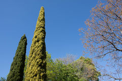 Central Park της Μαδρίτης, Ισπανία Στοκ εικόνα με δικαίωμα ελεύθερης χρήσης