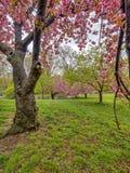 Central Park, весна Нью-Йорка Стоковые Изображения RF