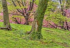 Central Park, весна Нью-Йорка Стоковая Фотография