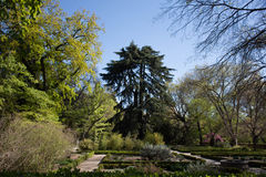 Central Park Мадрида, Испании Стоковое фото RF