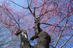 Central Park Мадрида, Испании Стоковое Изображение