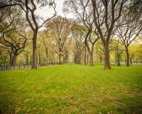 Central Park на ненастном дне Стоковые Изображения RF