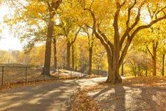 Central Park сценарный в осени, Нью-Йорк Стоковые Изображения