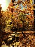 central park Zdjęcie Royalty Free