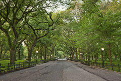 Central Park. Royalty Free Stock Image