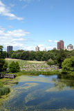 central park Obrazy Royalty Free