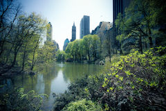 Central Park Obraz Royalty Free