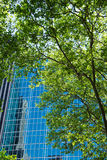Central Park Imagens de Stock Royalty Free