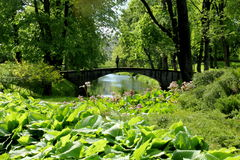 Central Park fotografering för bildbyråer