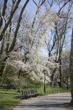 Central Park photos libres de droits