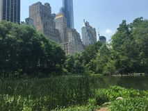 Central Park Foto de Stock Royalty Free