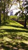 Central Park Imágenes de archivo libres de regalías