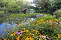 Central Park allo stagno Immagine Stock Libera da Diritti