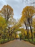 Central Park in the autumn, New York City royalty free stock photos