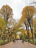 Central Park in the autumn, New York City royalty free stock photo