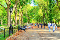 Central Park in autumn in New York Royalty Free Stock Image