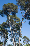 Central Park av Madrid, Spanien Arkivbilder