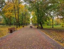 Central Park blisko Zaporoskiego Europa Wschodnia Zdjęcia Stock