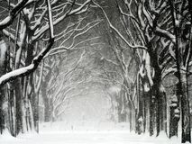 Free Central Park Blizzard 01 Stock Photography - 3413792
