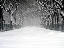 Central Park Blizzard 03. Central Park during a snowstorm in February 2006 Royalty Free Stock Images