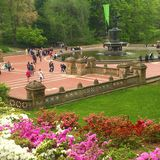 Central Park Blooming in Spring. New York City Central Park Azaleas flowers blossom in springtime Royalty Free Stock Photo