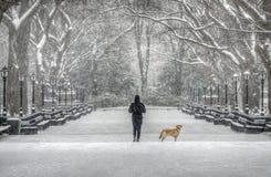 Central Park centrum handlowe obrazy stock