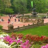 Central Park che fiorisce in primavera Fotografia Stock Libera da Diritti