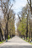 Central Park In Cluj Napoca Stock Photography