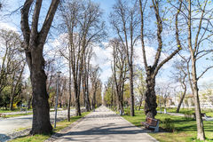Central Park In Cluj Napoca Stock Image