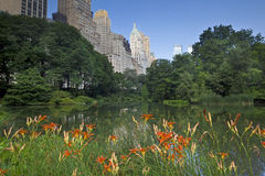 Central Park, day lilies in front of pond Royalty Free Stock Photos