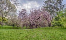 Central Park, de de Stadslente van New York Stock Foto