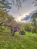 Central Park, de de Stadslente van New York Royalty-vrije Stock Foto's
