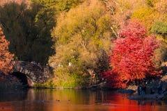 Central Park in de herfst Stock Foto