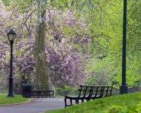 Central Park in de lente royalty-vrije stock fotografie