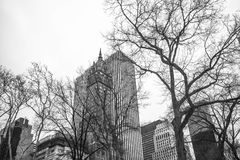 Central Park 2 de New York City Fotografia de Stock Royalty Free