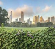 Central Park, de Stad van New York, schapenweide Royalty-vrije Stock Fotografie