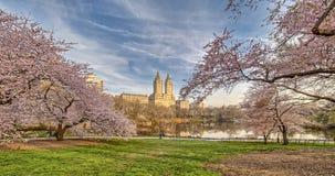 Central Park, de de Stadslente van New York royalty-vrije stock afbeelding