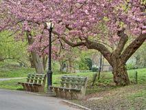 Central Park, de de Stadslente van New York stock afbeeldingen